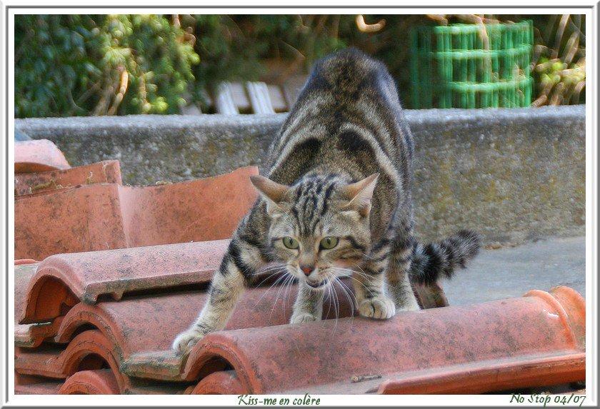 """L'image """"http://nostop.unblog.fr/files/2007/04/28avril066.jpg"""" ne peut être affichée car elle contient des erreurs."""